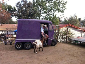 Cushman purple version with Bosse and our goat Rudy =D